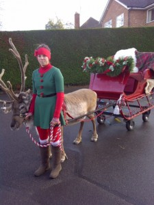 Reindeer with sleigh and handler.